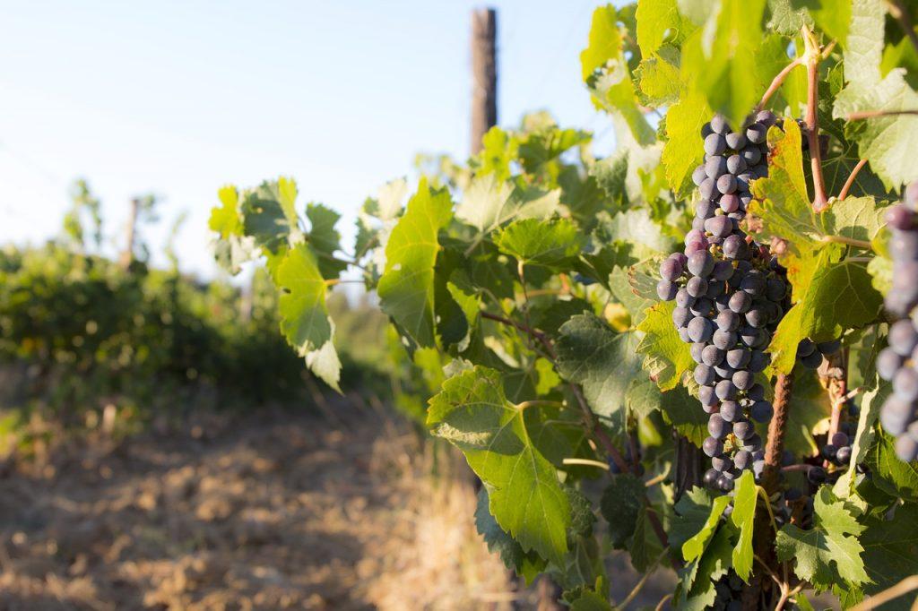 山梨県の奥野田ワイナリーではワイン製造にIoTを活用|スマート農業|人工知能を搭載した製品・サービスの比較一覧・導入活用事例・資料請求が無料でできるAIポータルメディア